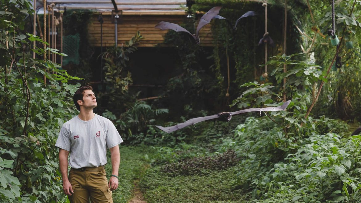 Henry Cavill in Durrell Bat Roost