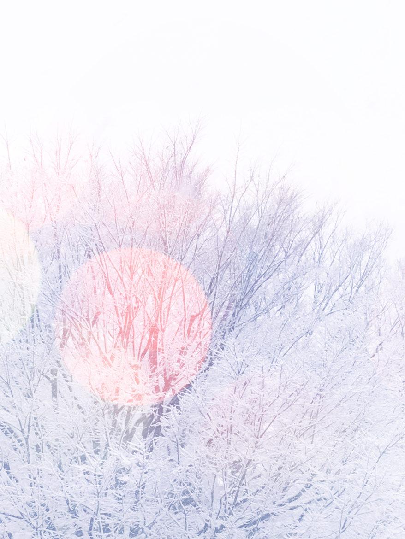 40 - Snow Flower - Aimi Nakazawa
